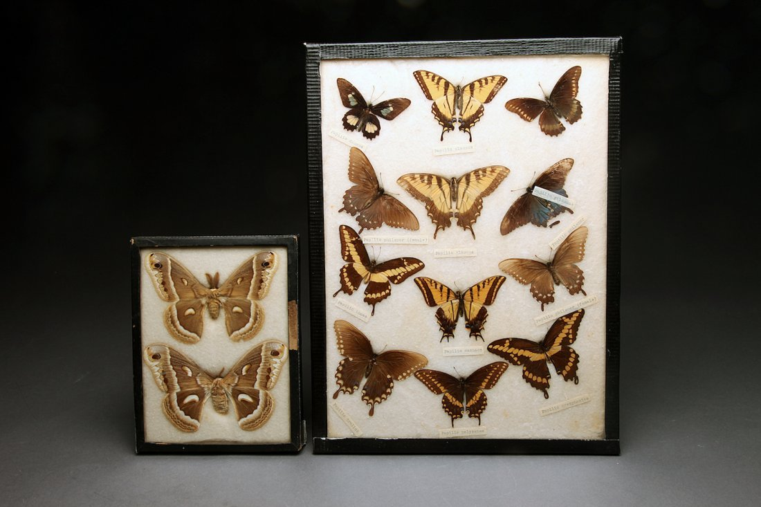 2 Vintage Frames of Butterflies and Moths