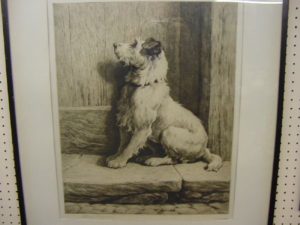 1007: HERBERT DICKSEE etching of a seated terrier dog p