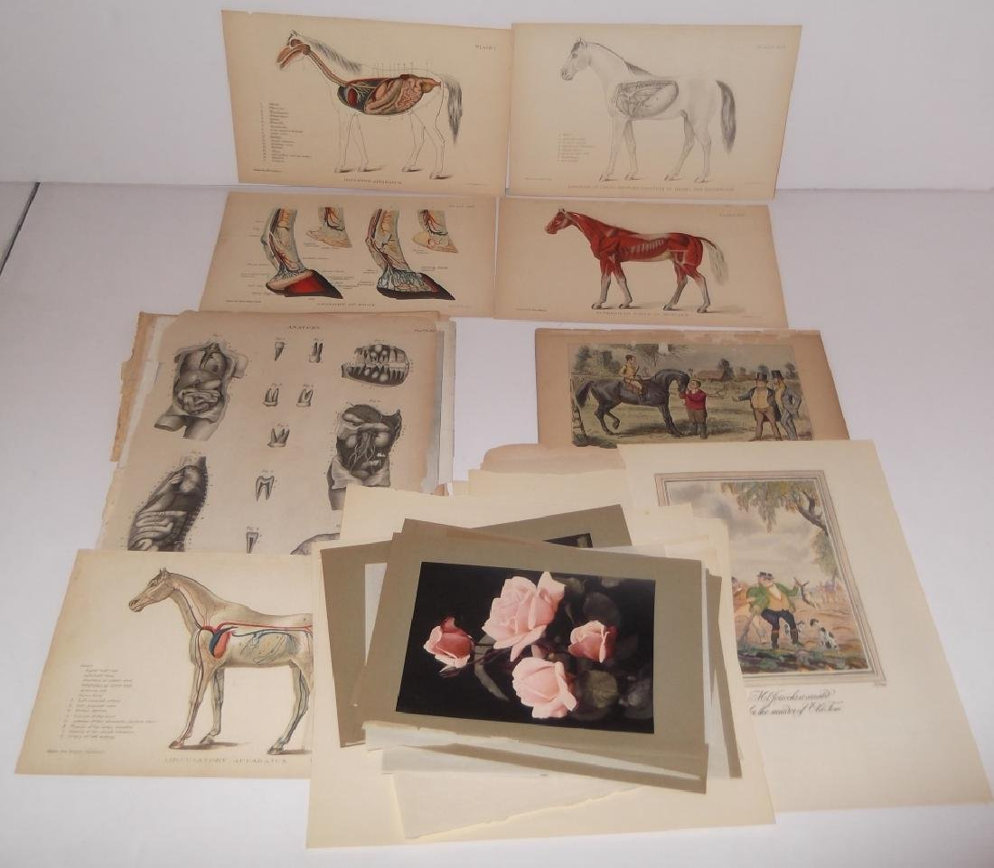 25 antique bookplate engravings/etchings/litho