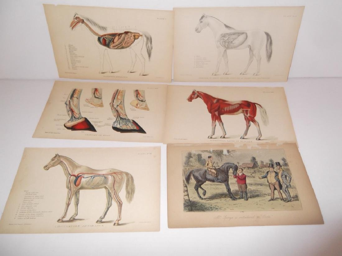 25 antique bookplate engravings/etchings/litho - 3