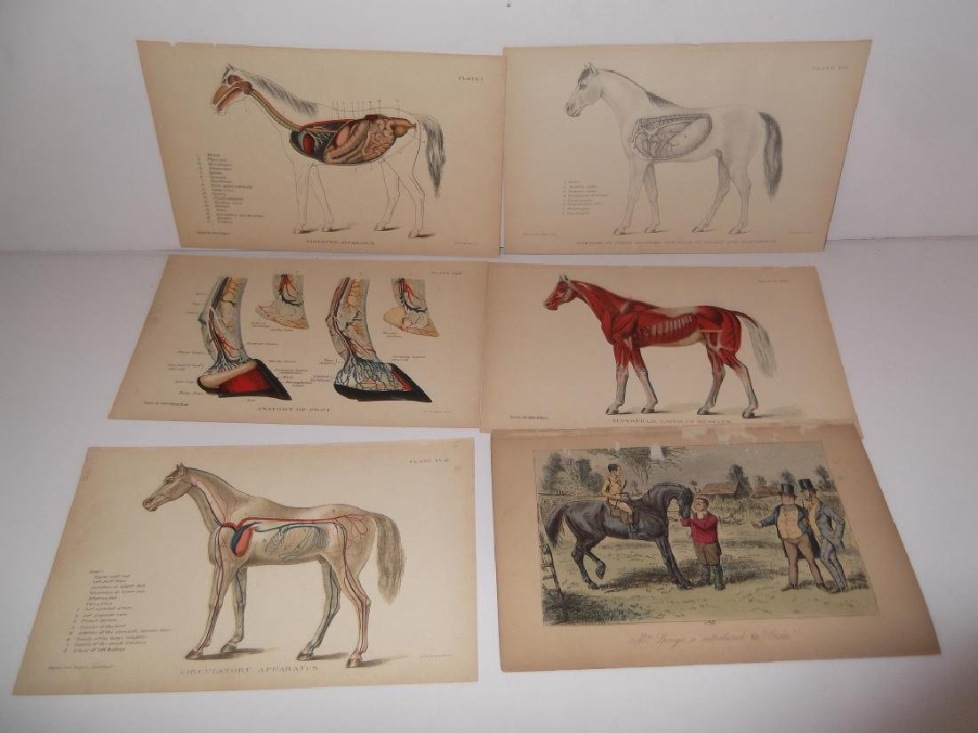 25 antique bookplate engravings/etchings/litho - 4