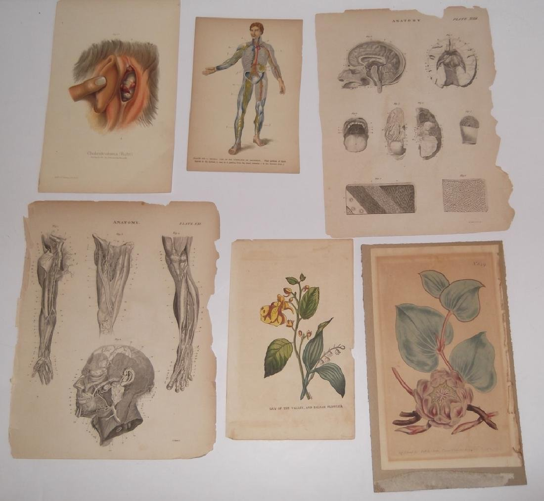 25 antique bookplate engravings/etchings/litho - 6