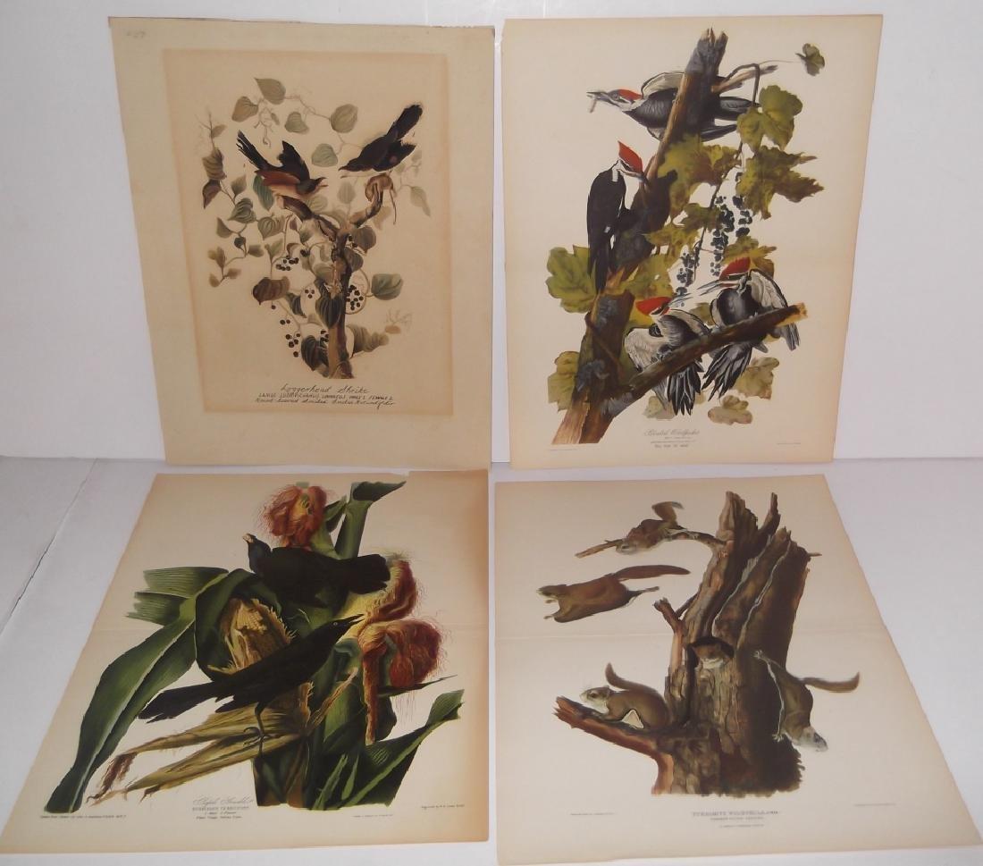 26 animal & bird lithographs - 10