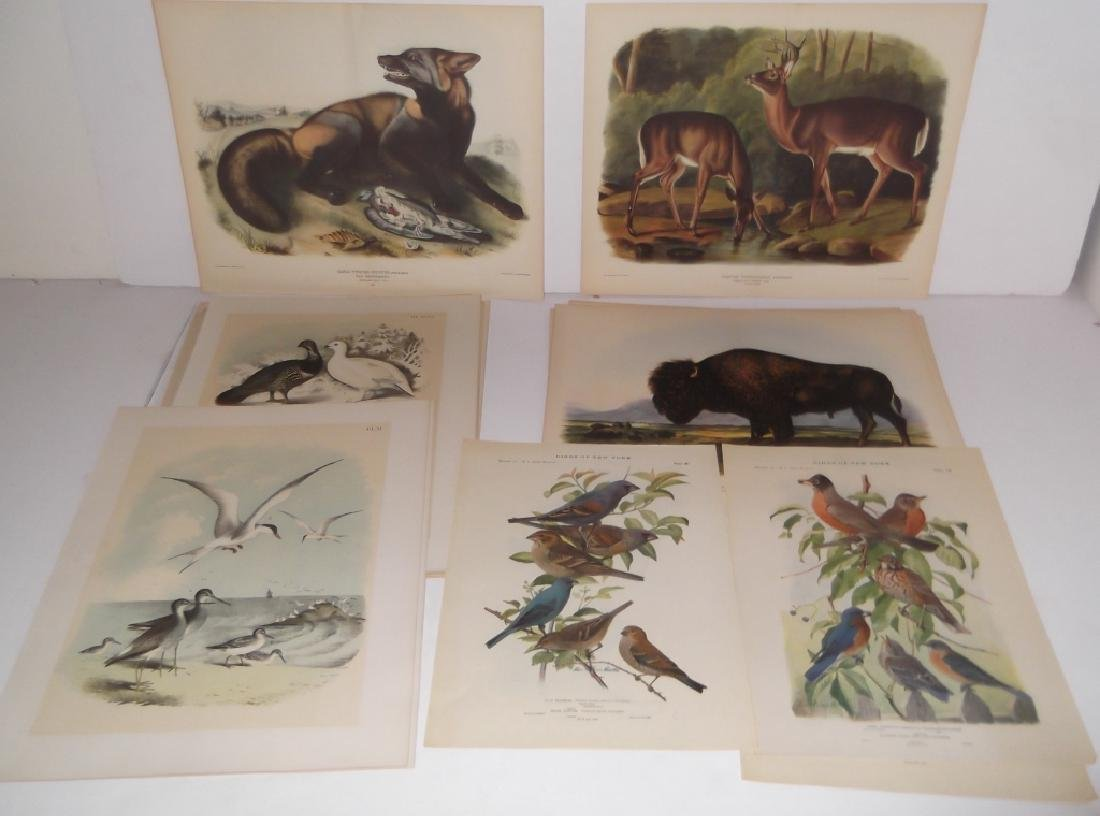 26 animal & bird lithographs
