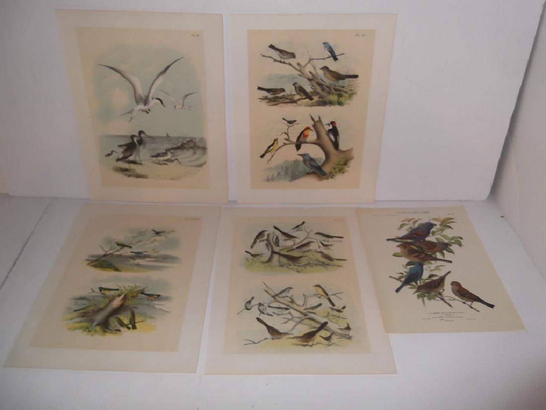 26 animal & bird lithographs - 3