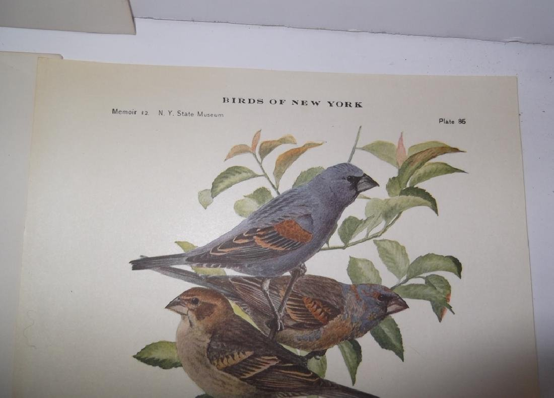 26 animal & bird lithographs - 4