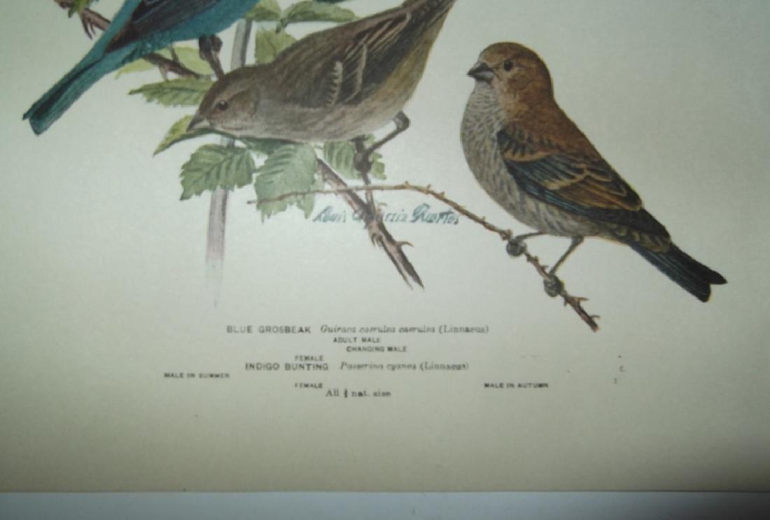 26 animal & bird lithographs - 5