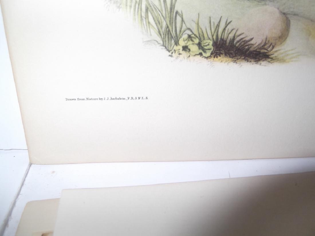 26 animal & bird lithographs - 6