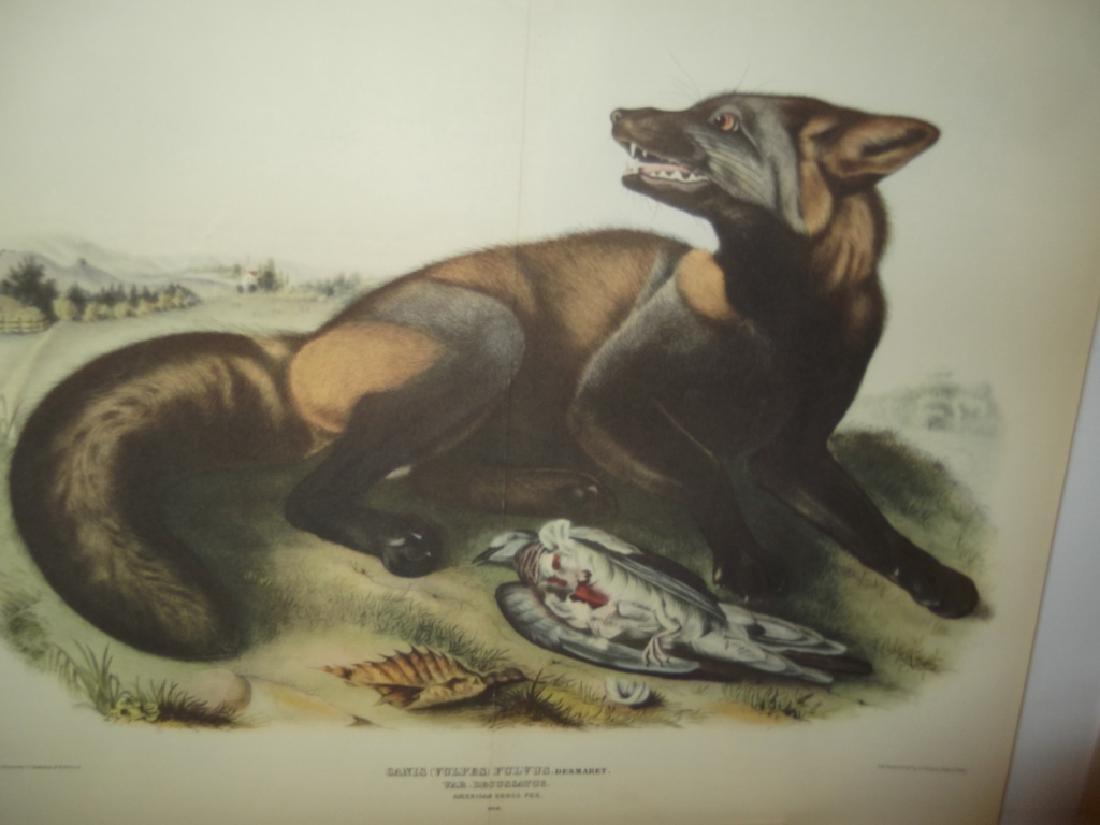 26 animal & bird lithographs - 7