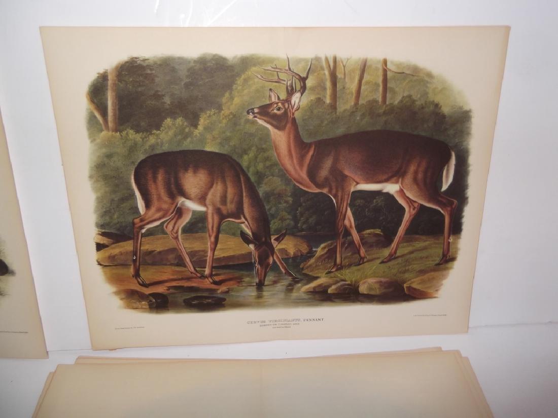 26 animal & bird lithographs - 8