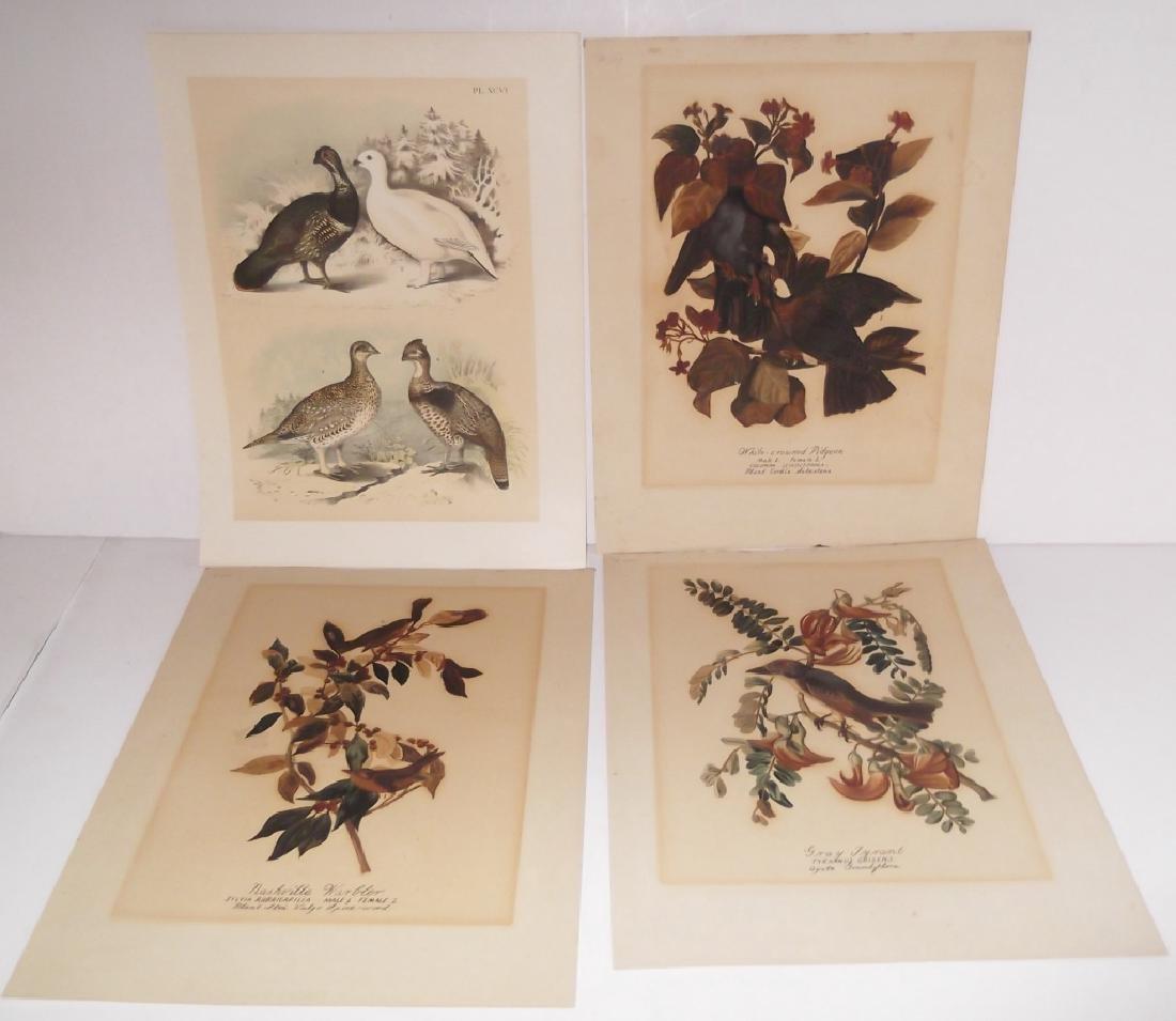 26 animal & bird lithographs - 9