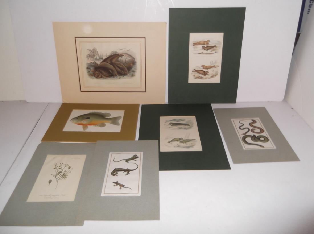 7 20th c. lithographs