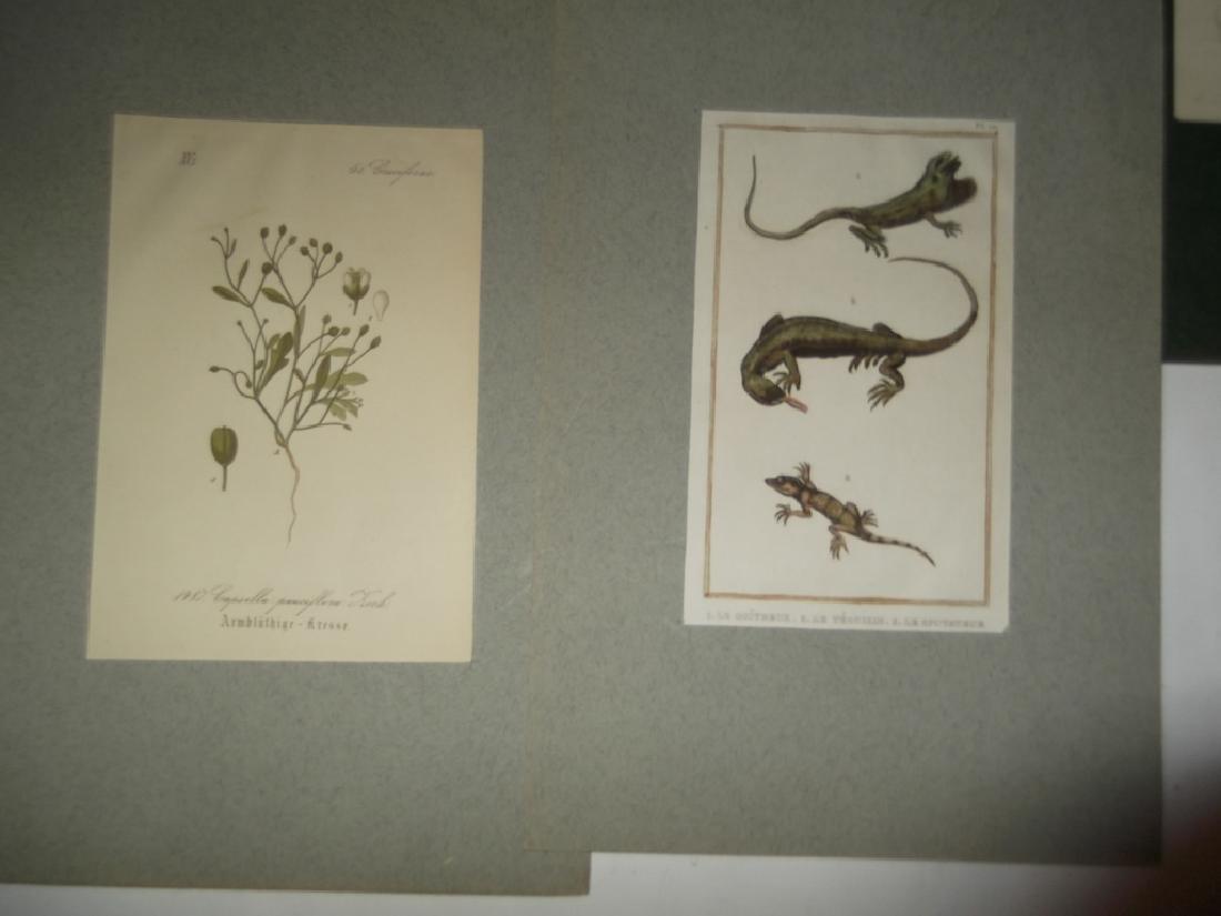7 20th c. lithographs - 3
