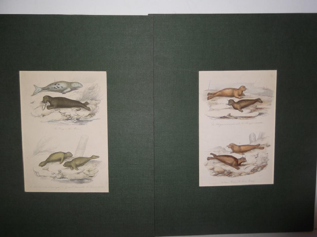 7 20th c. lithographs - 7