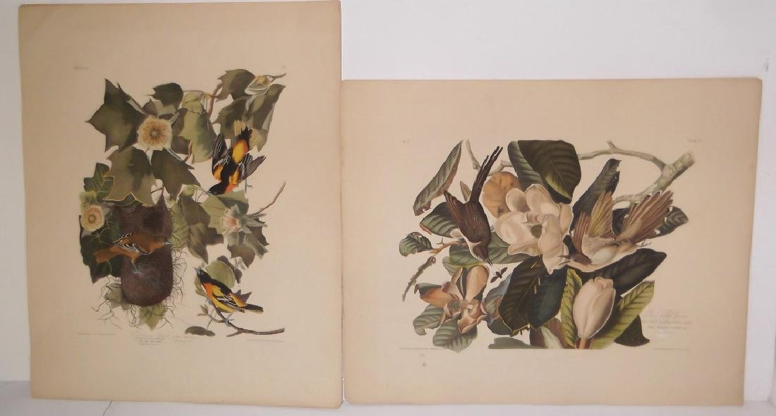 John J. Audubon bookplate lithograph prints - 10