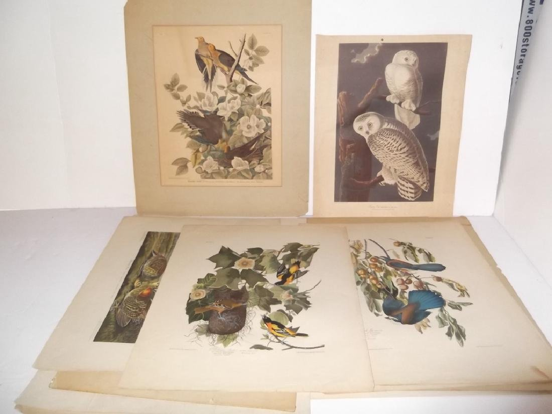 John J. Audubon bookplate lithograph prints