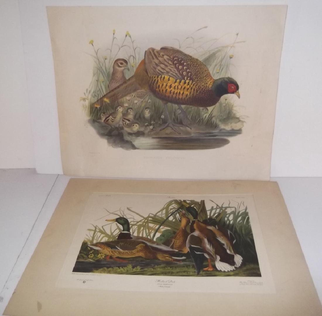 John J. Audubon bookplate lithograph prints - 2