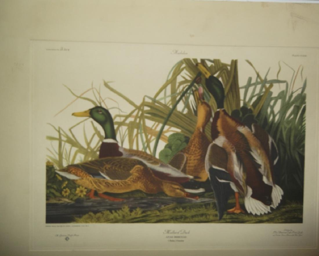 John J. Audubon bookplate lithograph prints - 3