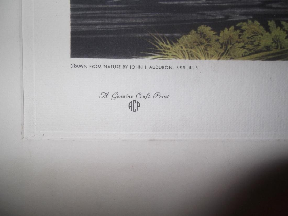 John J. Audubon bookplate lithograph prints - 4