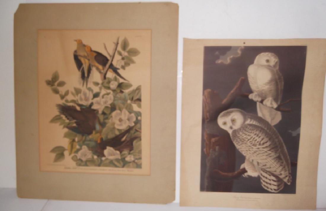 John J. Audubon bookplate lithograph prints - 5