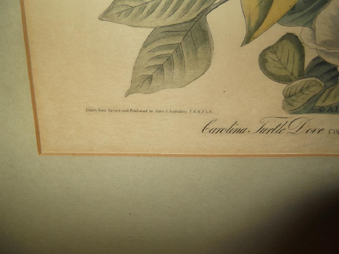John J. Audubon bookplate lithograph prints - 7