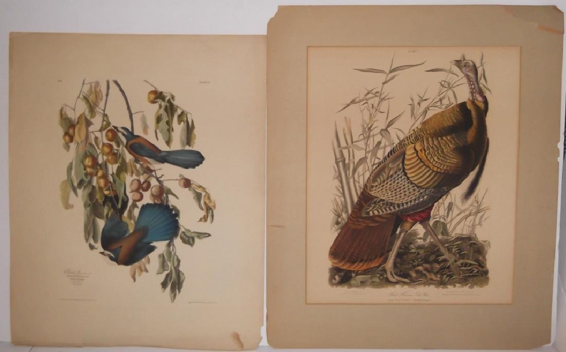 John J. Audubon bookplate lithograph prints - 8