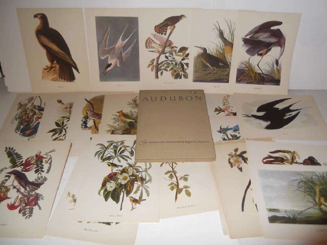 50 Audubon birds of America lithograph prints