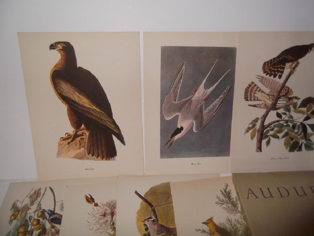 50 Audubon birds of America lithograph prints - 2