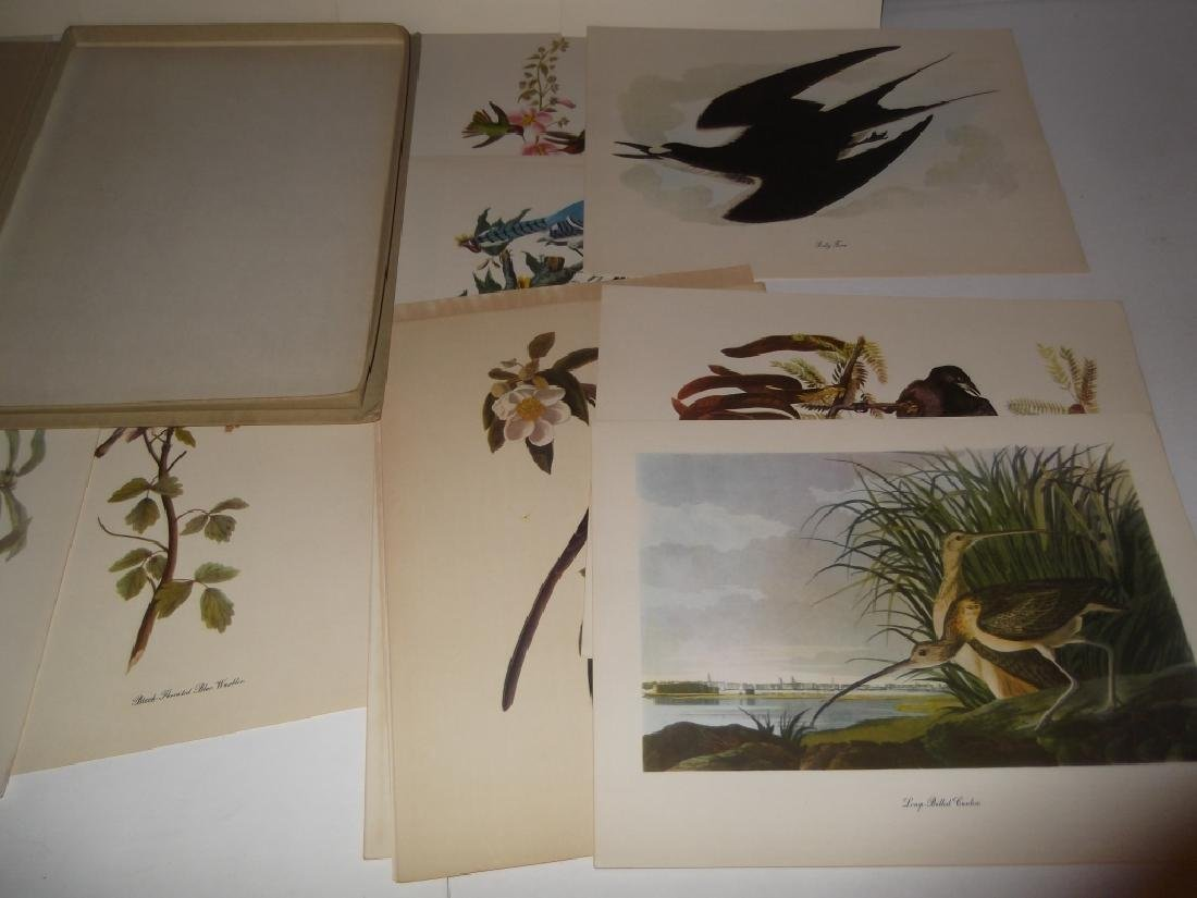 50 Audubon birds of America lithograph prints - 4