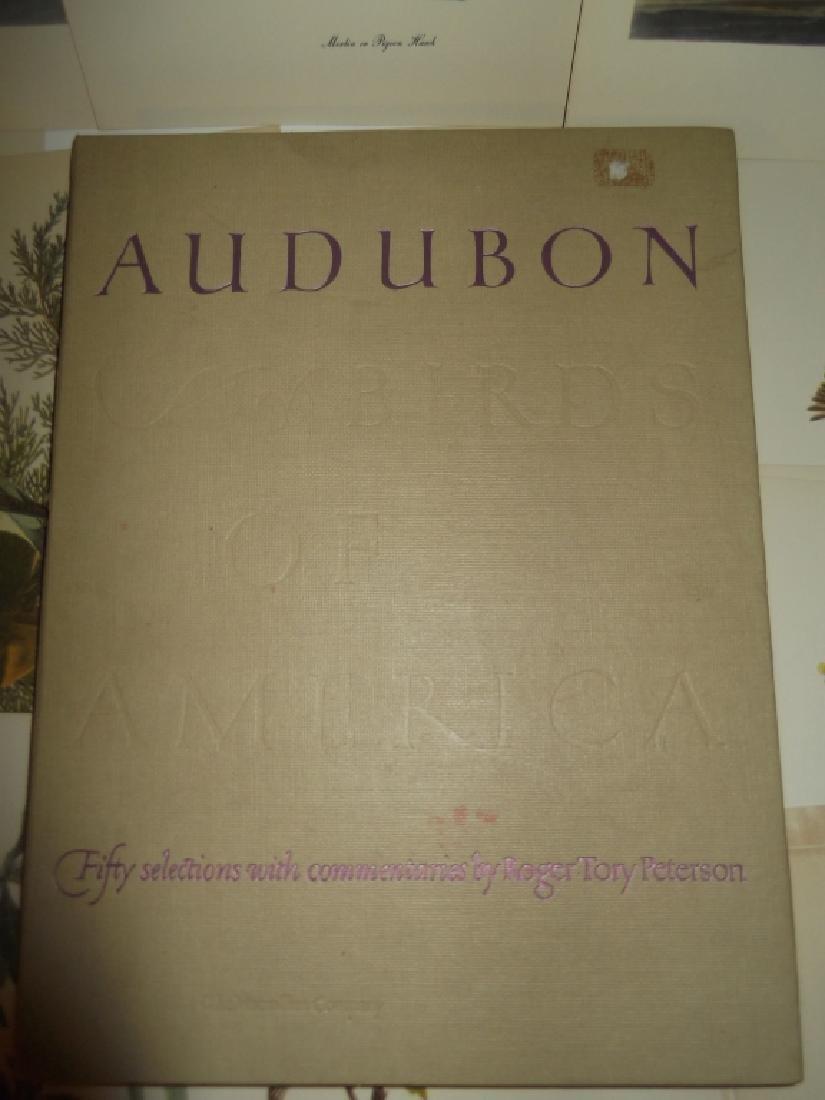 50 Audubon birds of America lithograph prints - 5