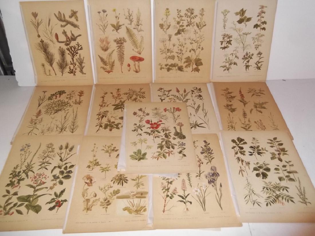 13 flower botanical bookplate lithograph prints