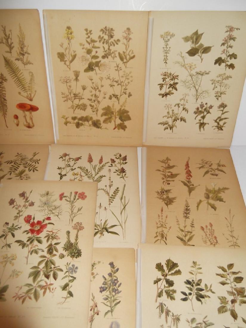13 flower botanical bookplate lithograph prints - 2