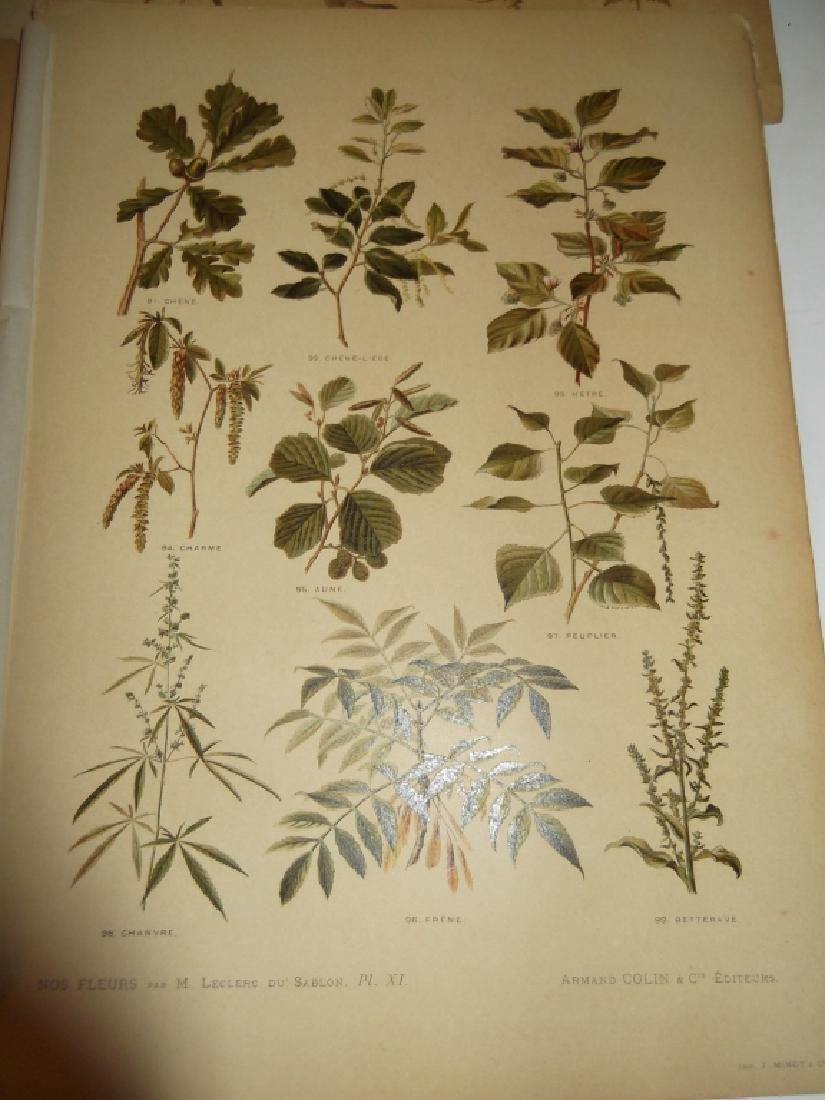 13 flower botanical bookplate lithograph prints - 3