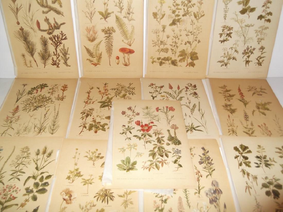 13 flower botanical bookplate lithograph prints - 4