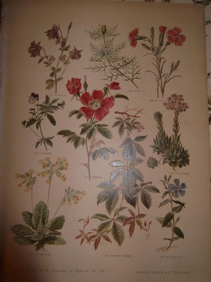 13 flower botanical bookplate lithograph prints - 5
