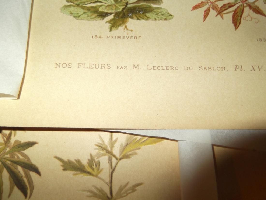 13 flower botanical bookplate lithograph prints - 7