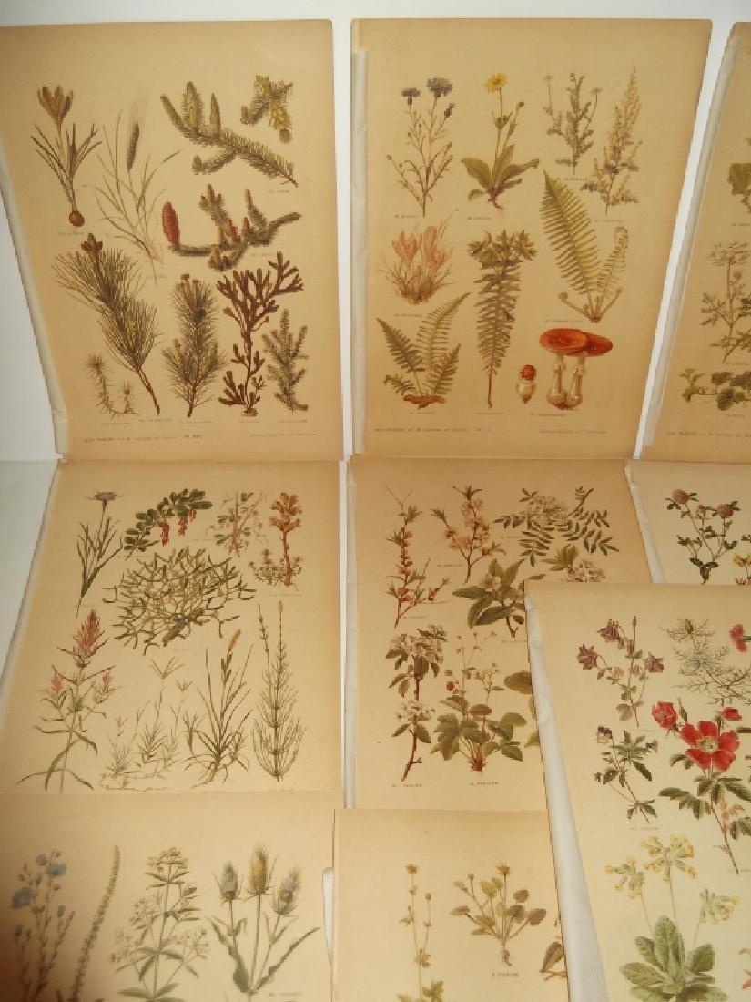 13 flower botanical bookplate lithograph prints - 8