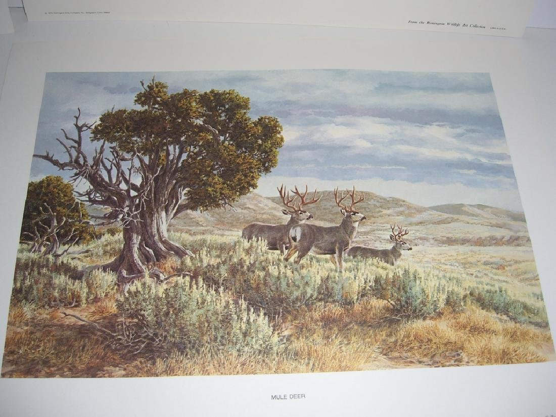 23 Remington Wildlife lithograph prints - 13