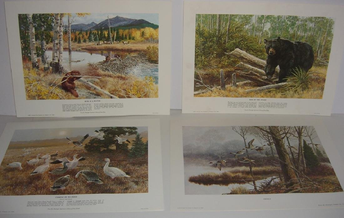 23 Remington Wildlife lithograph prints - 9