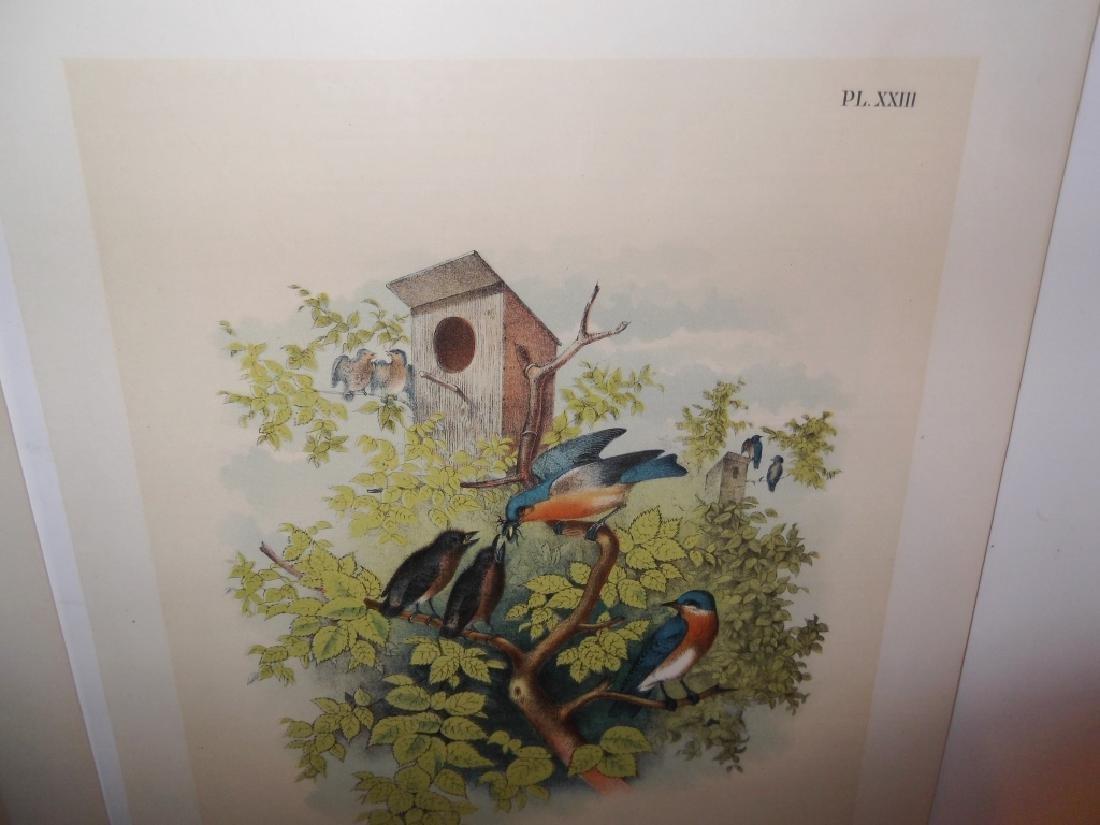 25 20th century bird lithographs - 2