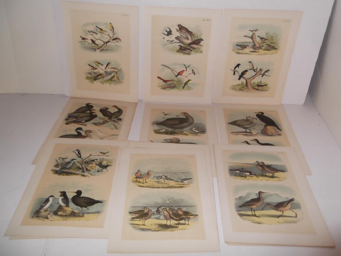 25 20th century bird lithographs - 6