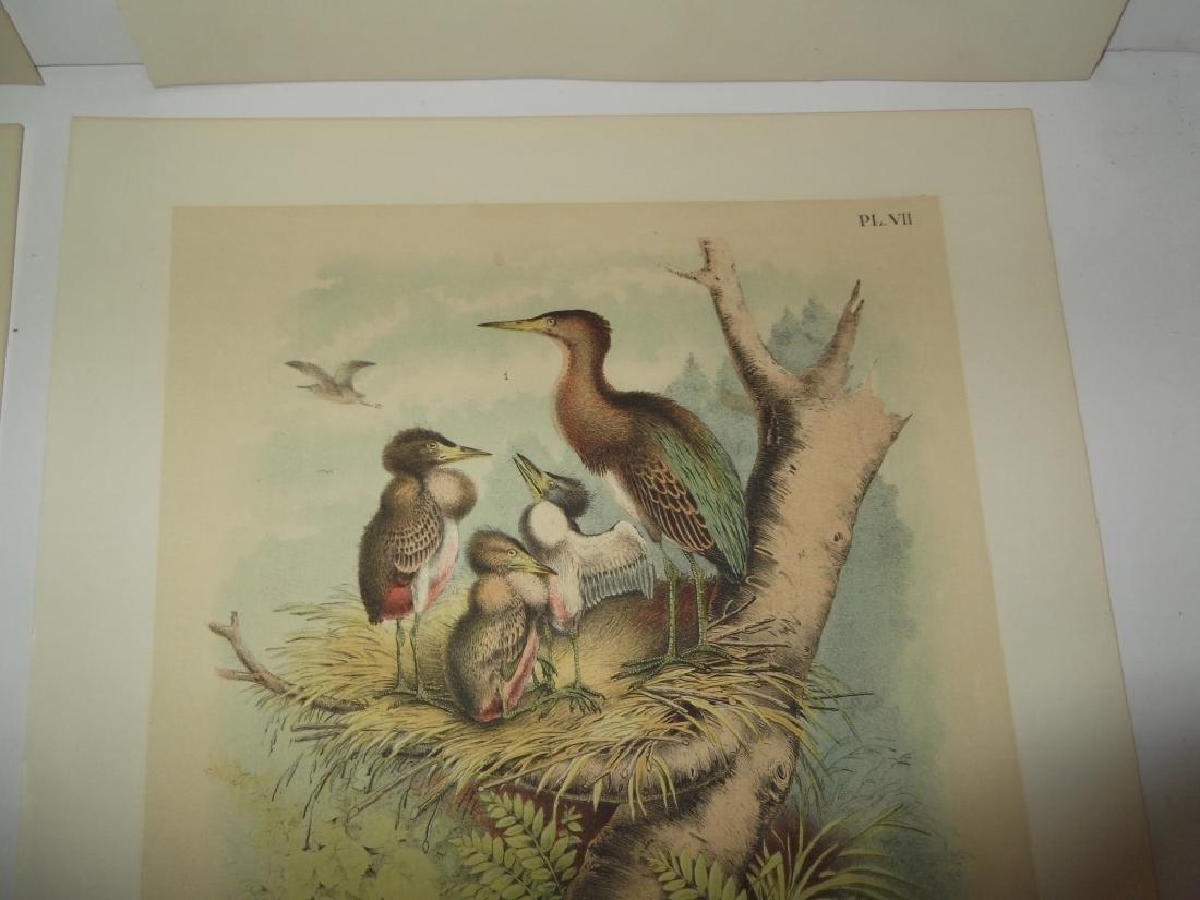 25 20th century bird lithographs - 9