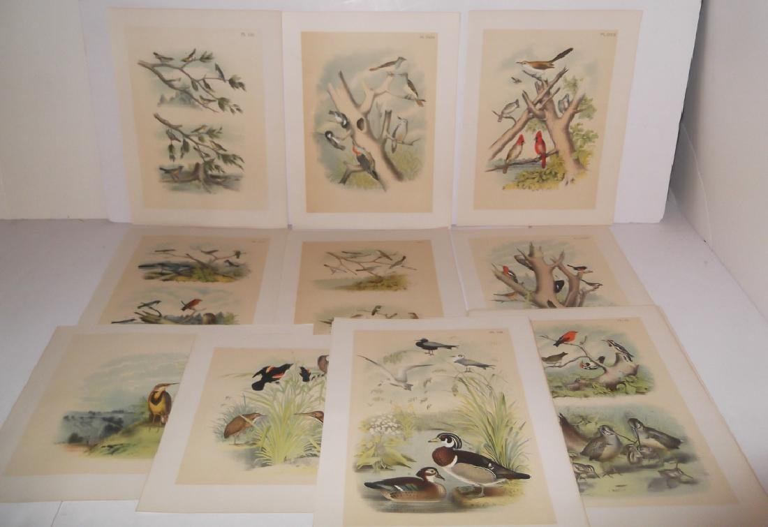 25 20th century bird lithographs