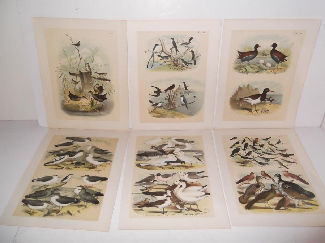 25 20th century bird lithographs - 2