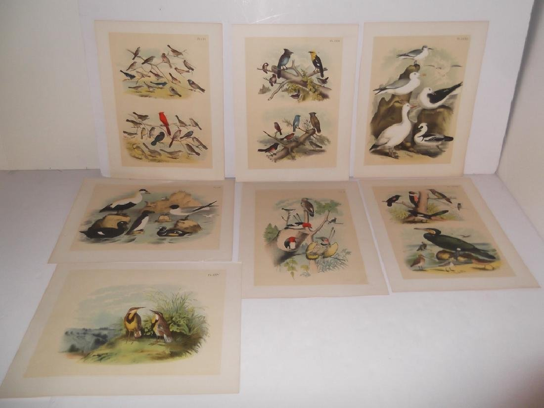 25 20th century bird lithographs - 3