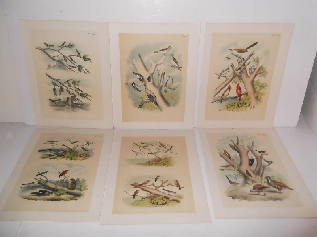 25 20th century bird lithographs - 5