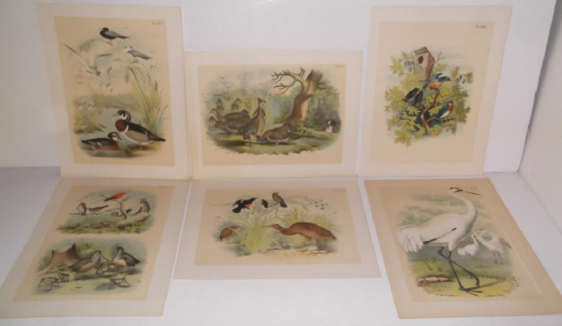 25 20th century bird lithographs - 6