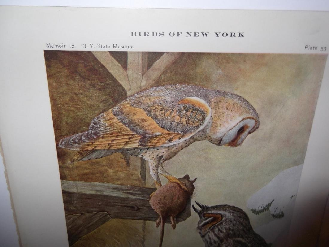 40 20th century  Birds of New York lithographs - 4