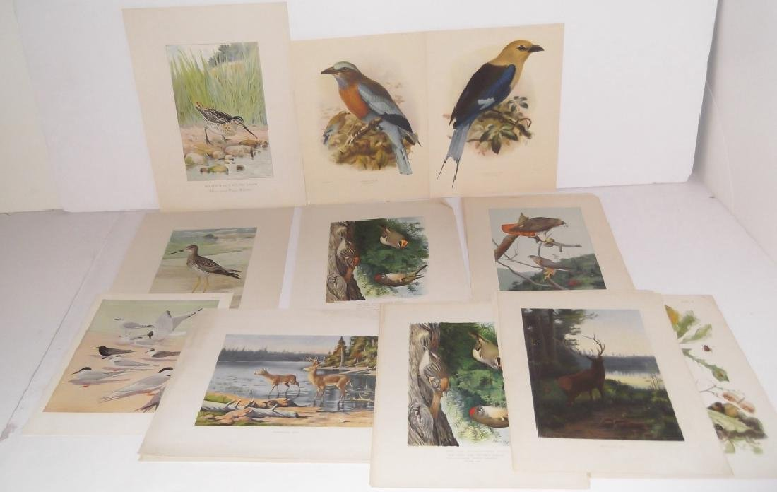 30 bird & animal  lithographs