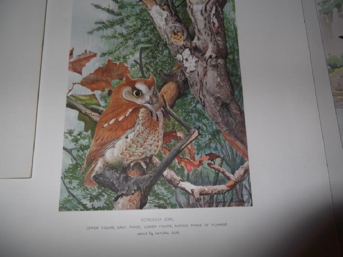 30 bird & animal  lithographs - 2